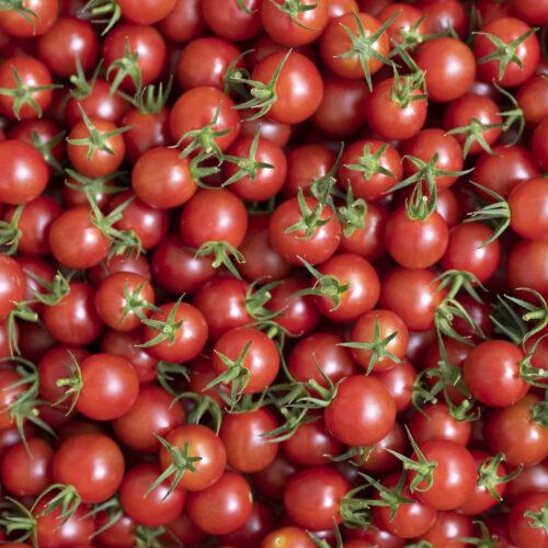 肥料屋さんのトマト出荷終了と次回販売について